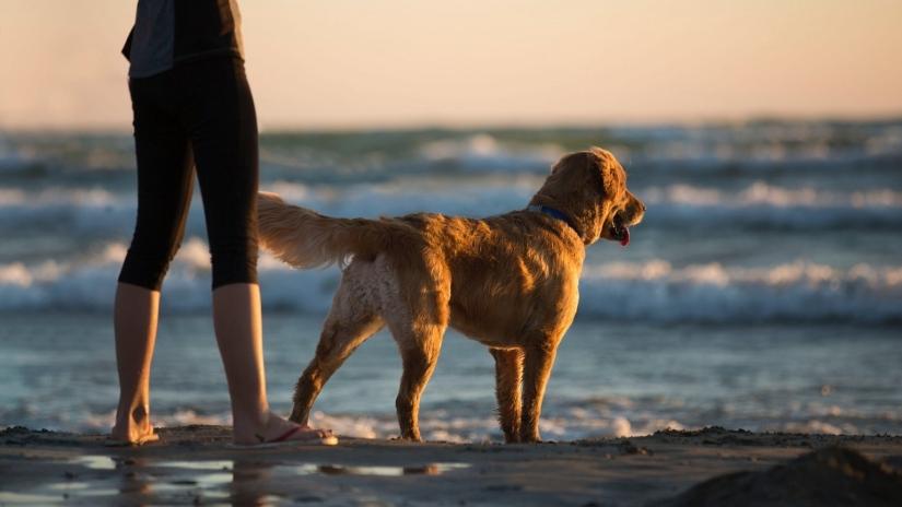 Posturas do cão