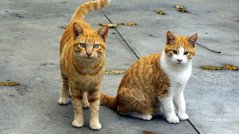 Universo felino: Gatos